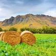 Stock Photo: Rural lanscape