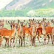 Stock Photo: deers