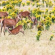 Deers — Stock Photo #9599177