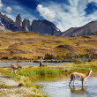Stock Photo: Torres del Paine, Patagonia, Chile