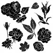 Rose flowers - Stock Vector