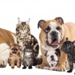 Foto Stock: Group of cats and dogs
