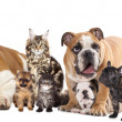 Group of cats and dogs - Stock Photo
