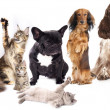 Group of cats and dogs - Stockfoto