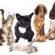 groep van katten en honden — Stockfoto
