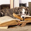 Dogs in glasses with books - Stock Photo