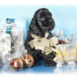 American Cocker Spaniel puppy and gifts christmas — 图库照片