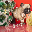 French bulldog puppy and gifts christmas — 图库照片