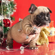 French bulldog puppy and gifts christmas , ball — Stock fotografie