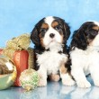 Stock Photo: Cavalier King Charles spaniel puppies