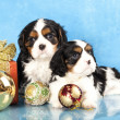 Spaniel puppies and gifts christmas — Stock Photo