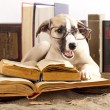 Dogs in glasses with books — Stock fotografie #8110601