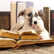 Foto de Stock  : Dogs in glasses with books