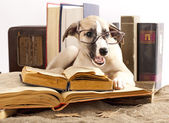 Dogs in glasses with books — Stock Photo