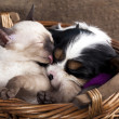 Foto Stock: Kitten and puppy