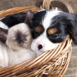 Stok fotoğraf: Puppy and kitten