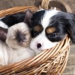Stock Photo: Puppy and kitten