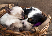 Kitten and puppy — Stockfoto