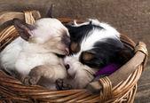 Kotě a štěně — Stock fotografie