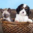Puppy and kitten — Stockfoto #8140055