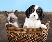 Puppy and kitten — Stockfoto