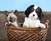 Valp och kattunge — Stockfoto