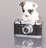 Puppy chihuahua photographer — Stock Photo