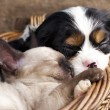 Spaniel  puppy and kitten — Stock Photo