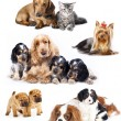 Group of cats and dogs — Stock Photo #9113527