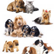 Stockfoto: Group of cats and dogs