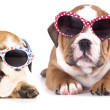 Puppy in sunglasses — Stock Photo
