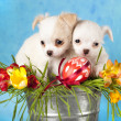Puppies and Easter eggs — Stock Photo