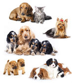 集团的猫和狗 — 图库照片