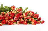 Roses in a bunch isolated on a white background with space for t — Stock Photo
