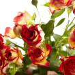 Bunch of red roses on white background - flowers and plants — Foto Stock