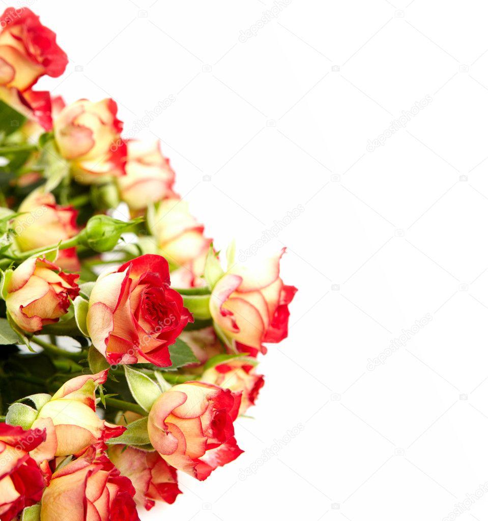 картинки красных цветов на белом фоне