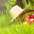 Apple in garden — Stock Photo