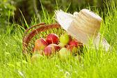 Mele rosse e cestino di giardino in erba verde — Foto Stock