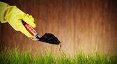 Bild von einer schaufel mit boden und pflanze — Stockfoto