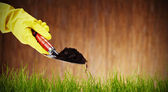 Image of a shovel with soil and plant — Stock Photo