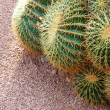 Cactus field - backgroun with copy space - Stock Photo