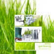 Fresh spring green grass isolated on white background — Stock Photo