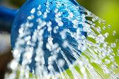 Blaue gießkanne verwendet, um das grüne gras wasser — Stockfoto