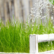 Green watering can used to water the frash grass — Stock Photo