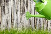лейка в саду на заделывают стрелять — Стоковое фото