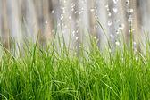 Hälla från vattenkanna på gräs vatten — Stockfoto
