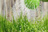 лить из лейки на воде травы — Стоковое фото