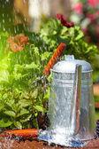 świeże zioła na drewniane podłogi z narzędzia ogrodnicze — Zdjęcie stockowe