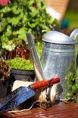 Fresh herbs on wooden floor with garden tools — Stock Photo