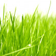 Fresh green grass background — Stock Photo #9140133
